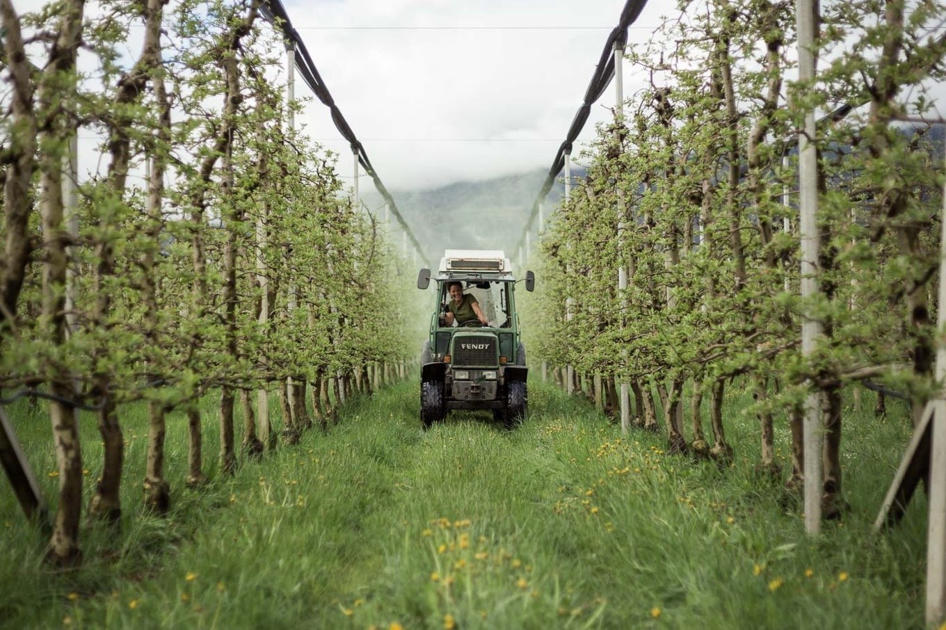 Organic Apple Cultivation All Year Round - Biosüdtirol