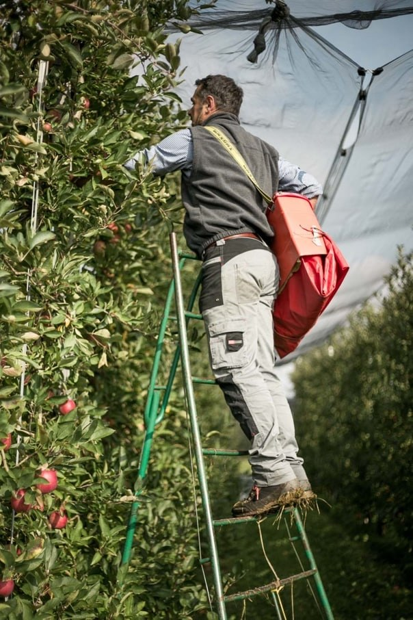 October - Organic Apple Cultivation- Biosüdtirol